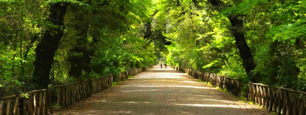 Il bosco di Capodimonte a Napoli ubicato nella Reggia di Capodimonte
